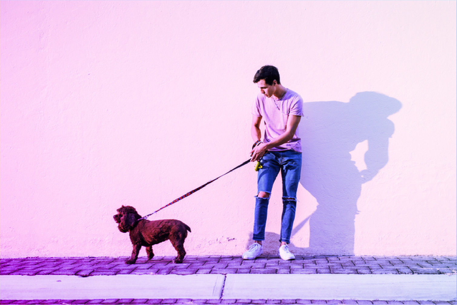 dog pulling man