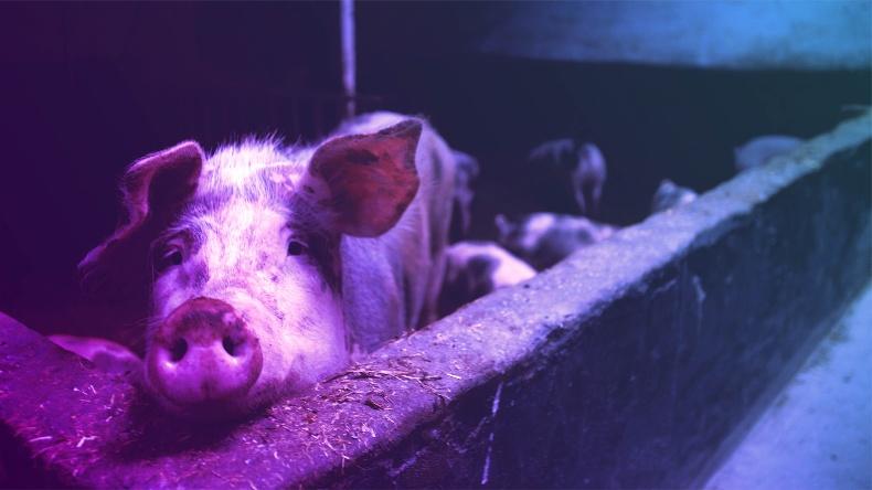 animal-farming-animals-farm-66627-1-1